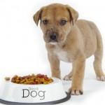 غذای خشک حیوانات-غذای خشک سگ و گربه-Dr.John