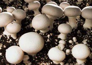 هزینه پرورش قارچ در سال 98 و 99 ، سالن پرورش قارچ خانگی ، درآمد پرورش قارچ ، خدمات راه اندازی سالن پرورش قارچ خانگی با هزینه مناسب